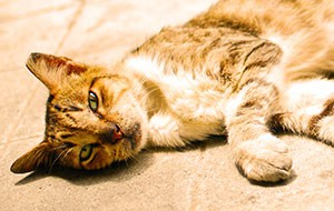 [skinny cat]