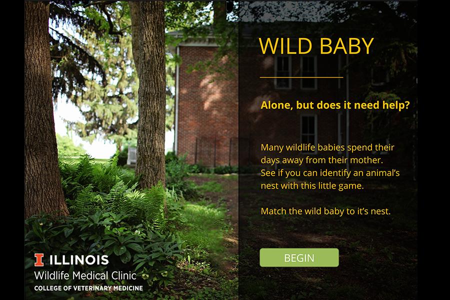 Wild Baby 1