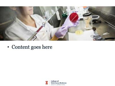 CVM PowerPoint slide style 2