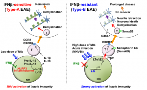 Mechanisms of IFN beta-sensitive and resistant EAE