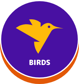 Birds - button