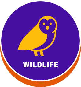 Wildlife - button