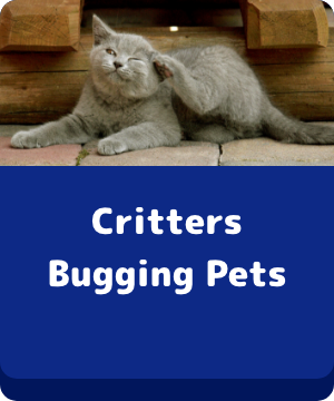 Critters Bugging Pets - Button