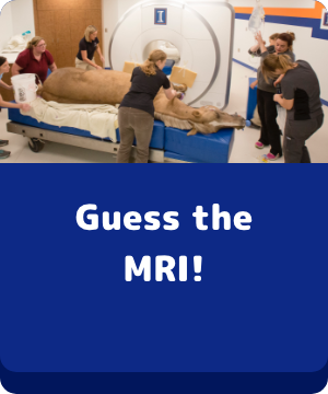 Guess the MRI! - button