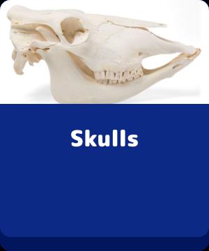 Skulls - buttons