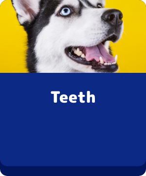 Teeth - Button