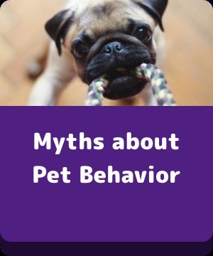 Myths About Pet Behavior - Button