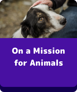 On a Mission for Animals - button