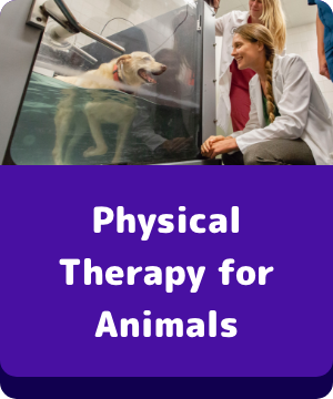 Physical Therapy for Animals - button