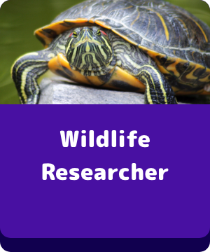 Wildlife Researcher - button