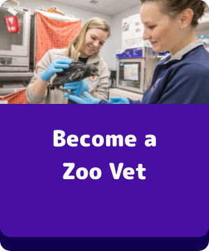 Become a Zoo Vet - button