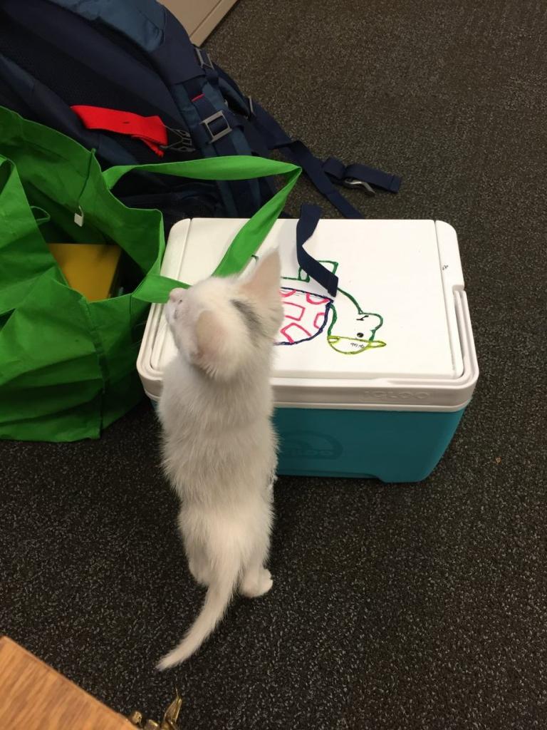 A 'wild' kitten inspects my work