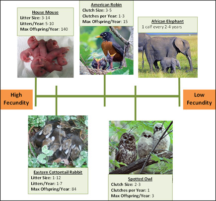 Wildlife Encounters: Adaptations - Fecundity