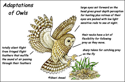 Wildlife Populations: Adaptations and Resource Use