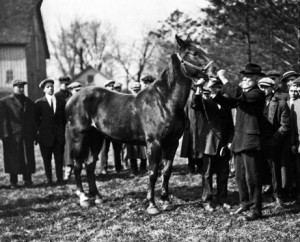 [Historical photo of men in suits outside with horse]