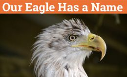 [our eagle has a name]