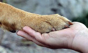 [paw in hand]