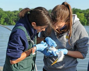 [Gabriela Escalante (left) doing bird research in Chicago]