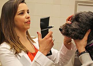 [Dr. Bianca da Costa Martins examines a dogs eyes]