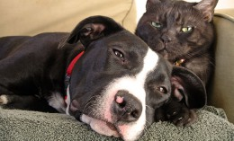 [dog and cat lie on couch together]