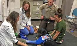 [police dog treated at Vet Med]