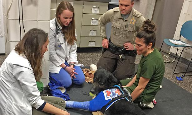 [police dog treated at Vet Med]