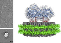[Cyclooxygenase-2 Catalysis and Inhibition in Lipid Bilayer Nanodiscs]