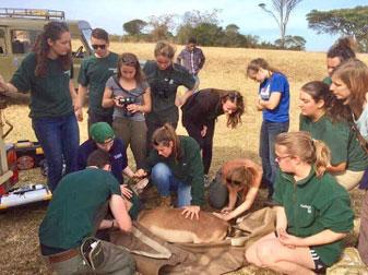 [Rachel Stuart helps with care for an impala]