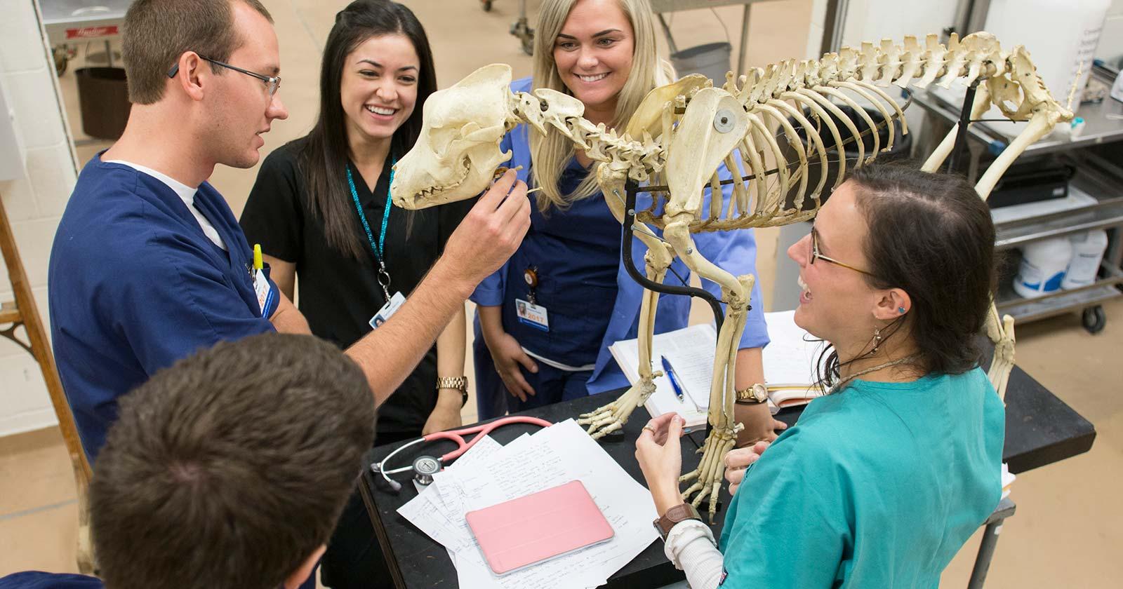 [five vet students with dog skeleton]