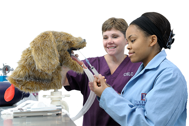Veterinary Assistant Students