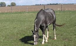 [horse in a field]