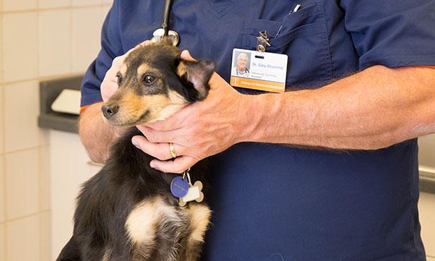 [dog and veterinarian]