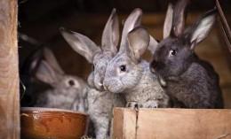 [bunnies in a box]