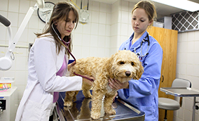 Caring For Animals Veterinary Medicine At Illinois