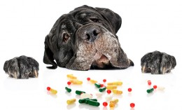 [dog with pills]