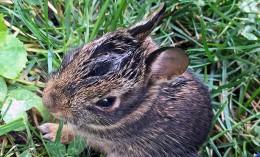 [baby bunny]