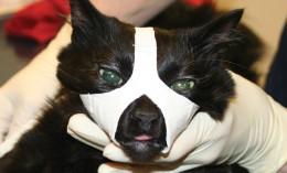 tape muzzle