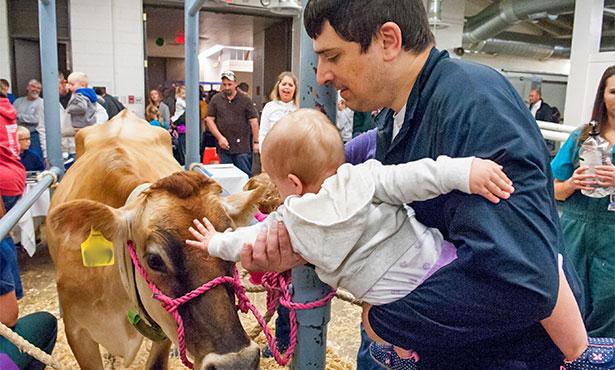 [Vet Med Open House cow milking]