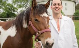 Horses Dr. Clark-Price