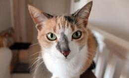 [cat looks at camera]