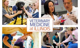 [College of Veterinary Medicine Vision]
