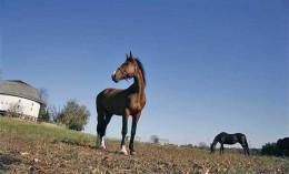 [horses and round barn]