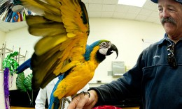 [a parrot shows off its unique beak profile at Vet Med Open House]