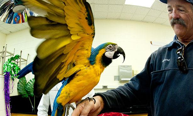 [a parrot shows off its unique beak profile at Vet Med Open House]