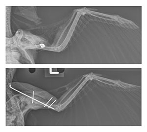 crow x-rays