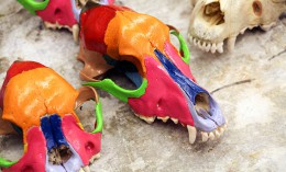 [dog skulls with each bone painted a color]
