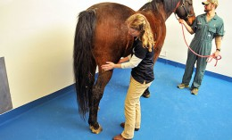 [Dr. Annette McCoy is an expert in equine osteochondritis dissecans]