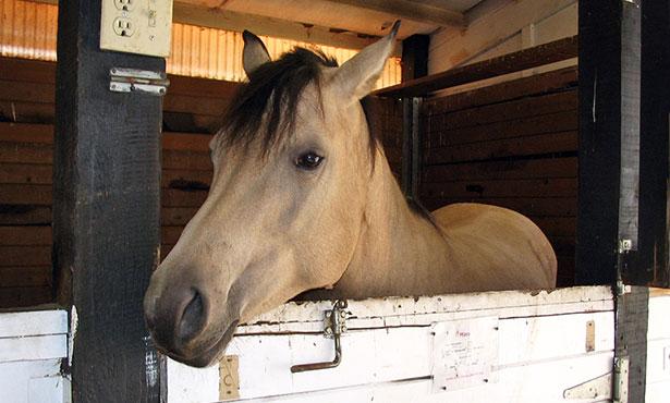 [horse in a barn]