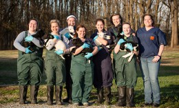 [Illinois veterinary students with lambs]