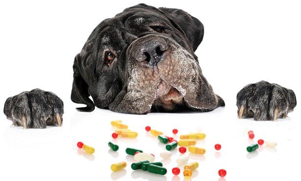 Vitamin D Dog